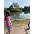 Sienna's walk