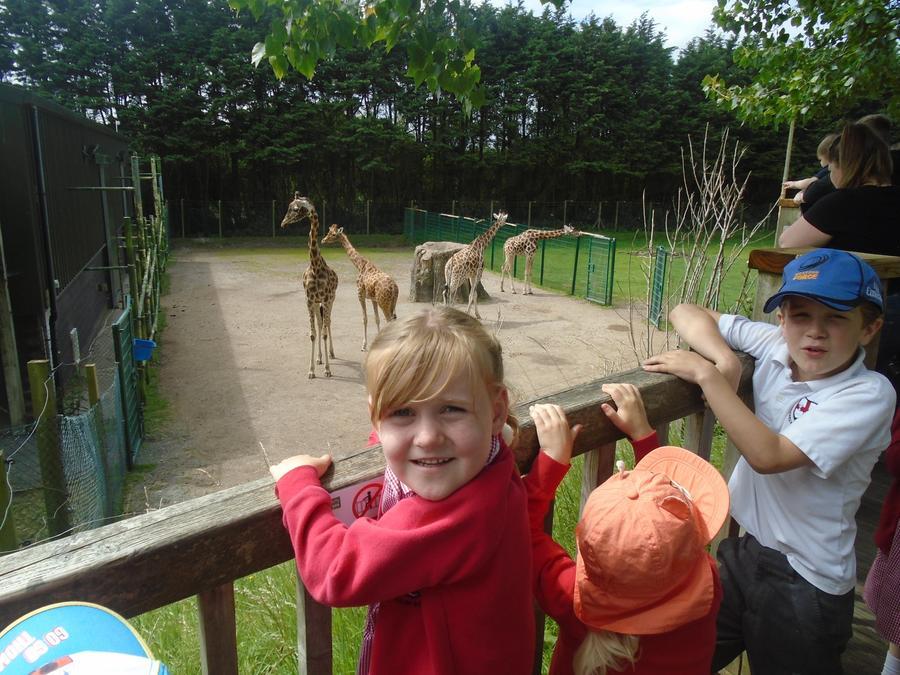 The giraffes were the tallest animals
