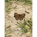 Elijah found a butterfly.