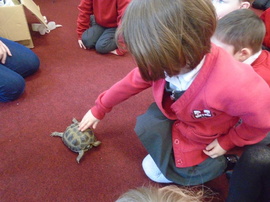 Terence the hibernating tortoise
