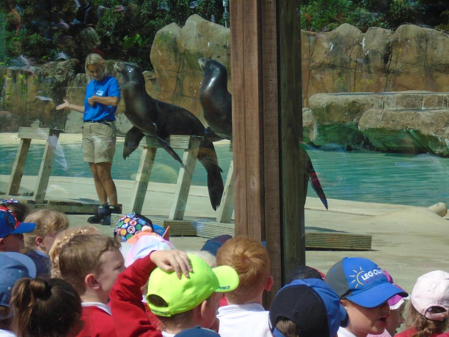 The sea lion show was great fun