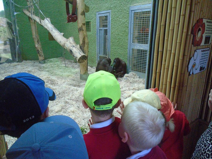 The orangutans shared their leaves