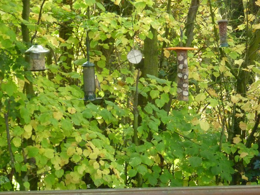 Look at the different types of bird feeders