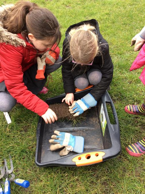 We examined the soil for insects