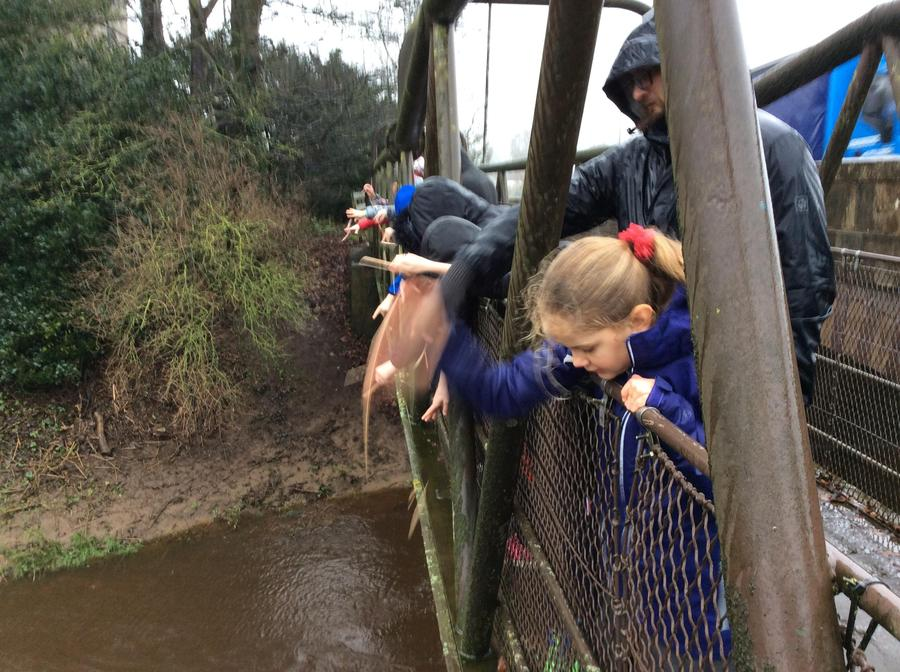 Playing pooh sticks.