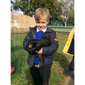 Our new chickens have arrived in school.