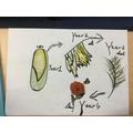 Athena's crop rotation