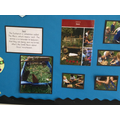 Station 6 reflection activity - Willow Class garden tomb