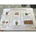 Plant work by Lucas in Year 2