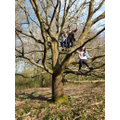 Poppy (Y5) and Violet (Y2) tree climbing