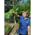 Lucas in Year 4 picked radishes for lunch