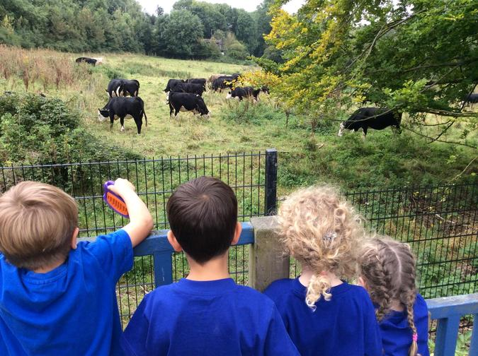 Watching the cows from our playhouse
