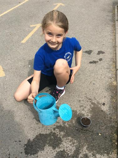 Planting our wild flowers