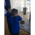 Hearing - what does a biscuit sound like when it breaks?