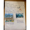 Isabella's tsunami fact sheet