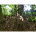 Ellie-Mae building a den in the woods