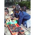 Sowing peas and nasturtiums