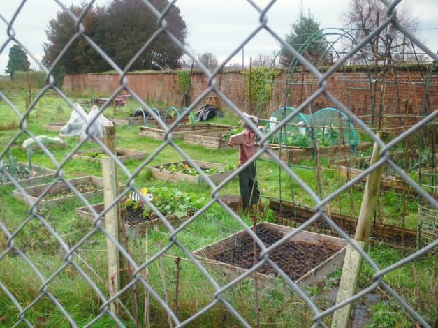 The allotments.