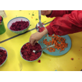 Making beetroot hummus