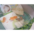 Our Painted Lady butterflies