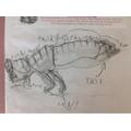 Careful pencil drawing of a dinosaur