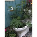 We re-used a toilet as a plant pot!