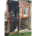 The old shed door recycled as a greenhouse door!