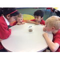 Observing the changes in our caterpillars