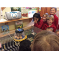 Visiting our newly hatched chicks