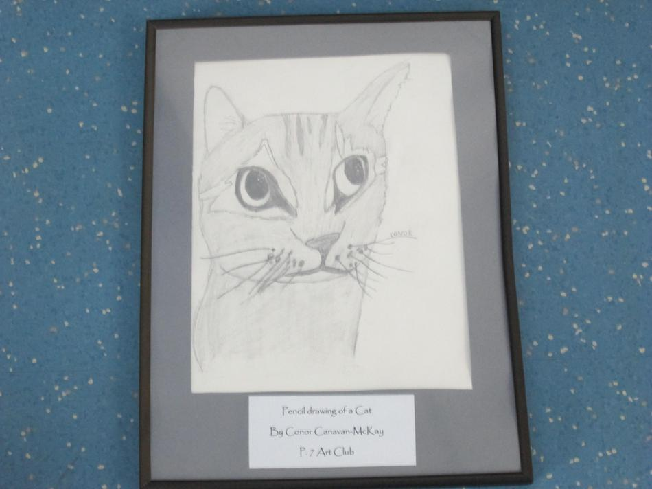Pencil Drawing of a Cat