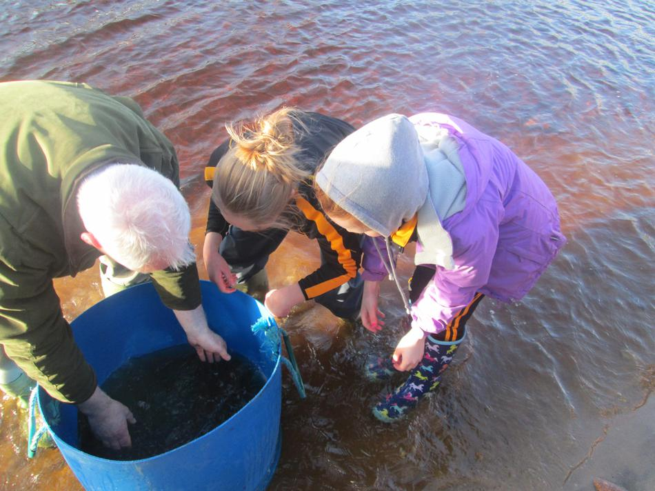 Releasing salmon on their journey