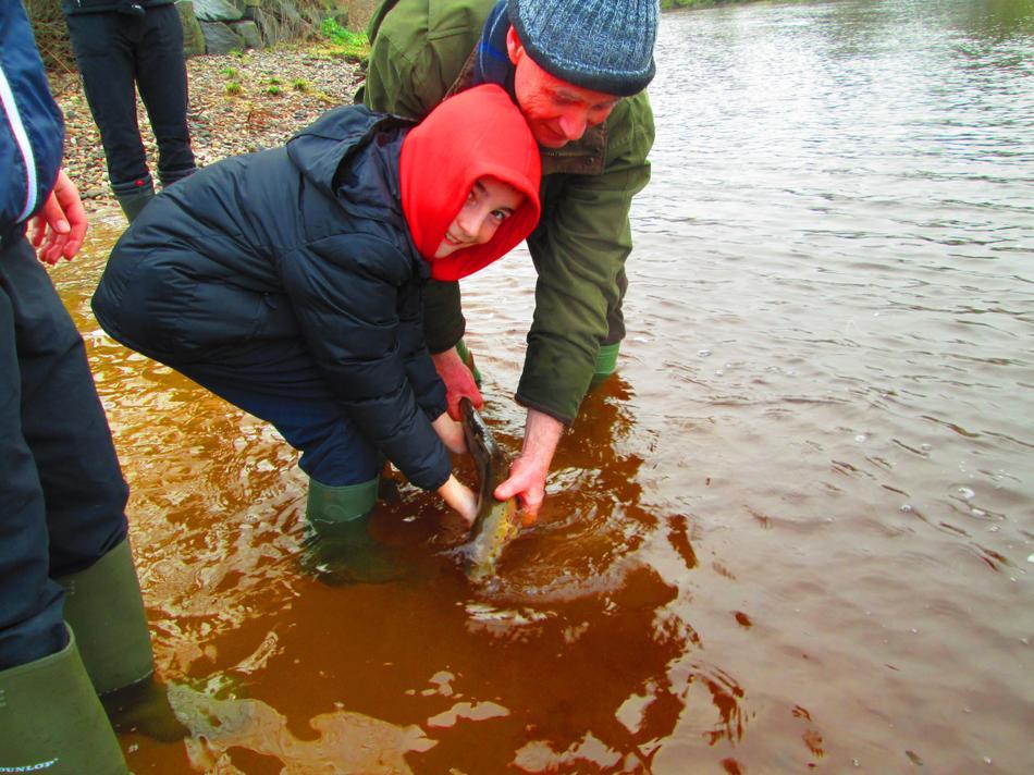 Releasing the salmon