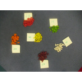 Reception sorted and counted the jellybeans.