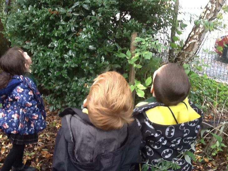 We went on a leaf hunt.