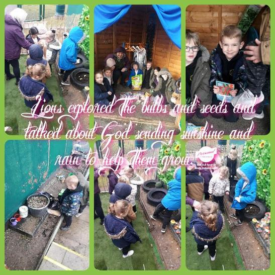 After examining the seeds and bulbs we planted them around the Reception.