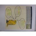 Beegu Writing Activities