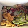 Keenan's Autumn walk findings!