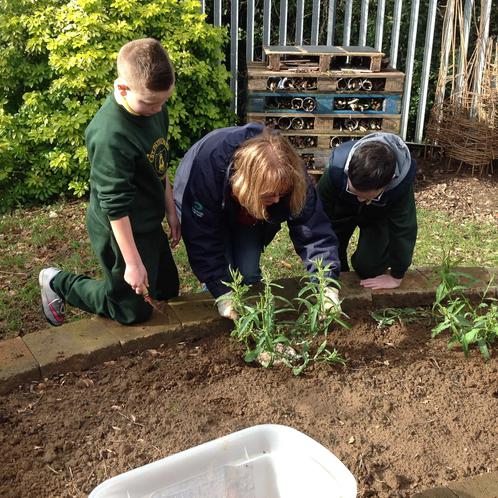 Planting in our Eco garden