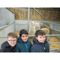 But we liked the alpacas!