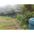 Vegetable garden view 3