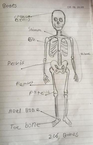 Labelling bones by Solomon
