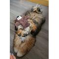 Miss Abrey's puppy Biscuit has had a go