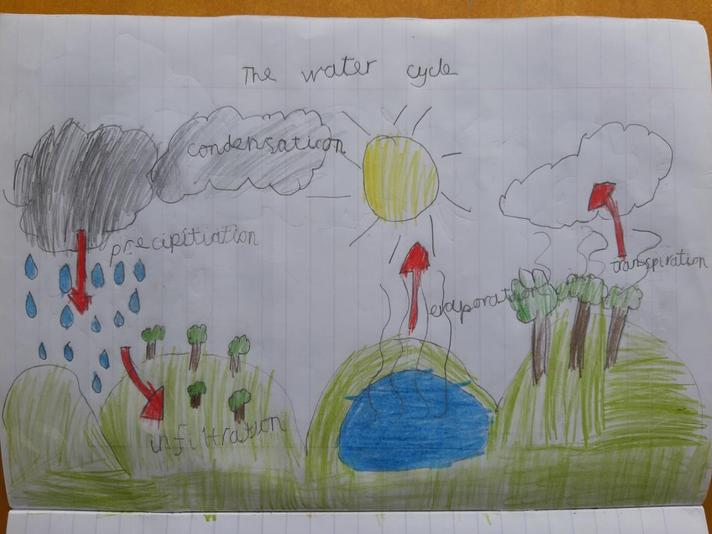 Sven's diagram of the water cycle