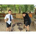 An archaeological dig looking for dinosaur bones