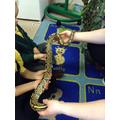 Prince the snake