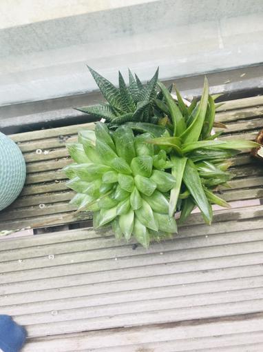 Sahara's Plants