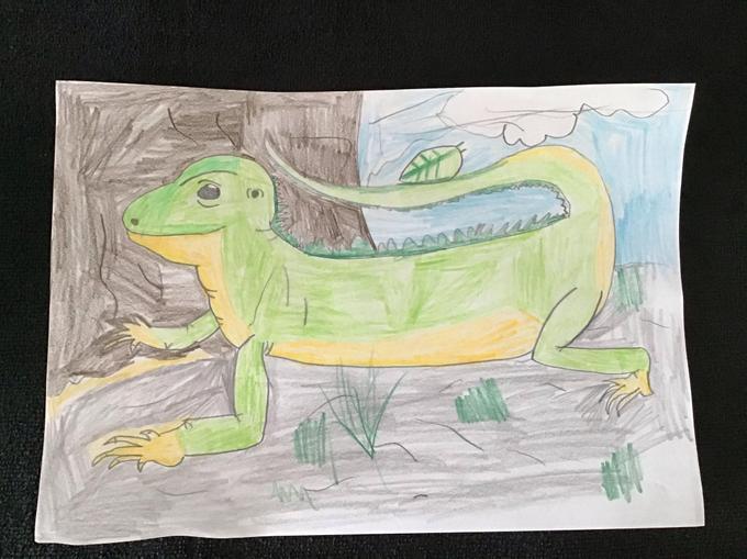 Devon's Gecko.