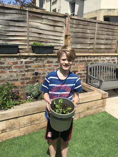 Growing beetroot from a seed