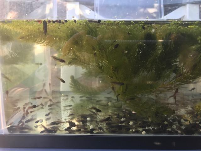 Can you count the tadpoles?