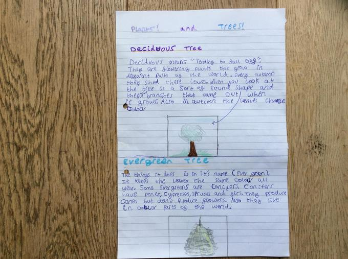 Edward's Deciduous and Evergreen Trees